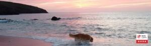 Coastal sunsets take some beating