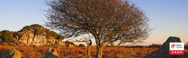 Wild & Remote Pembrokeshire