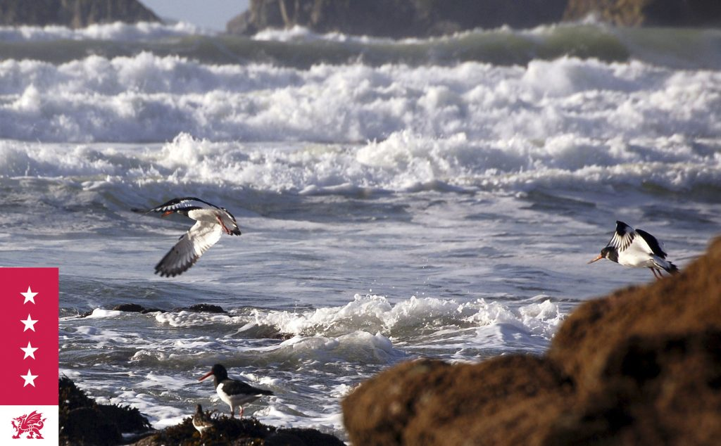 Seabirds off Pembrokeshire Coast