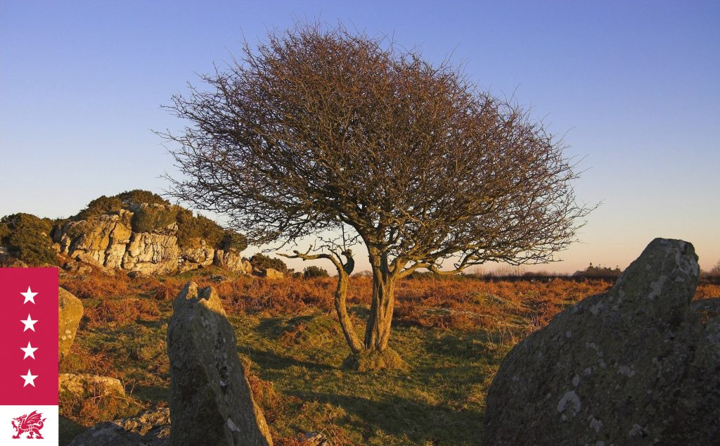 Ancient landscapes and rock formations in Pembrokeshire